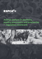 Cover Animal welfare in slaughtering establishments regulatory scorecard